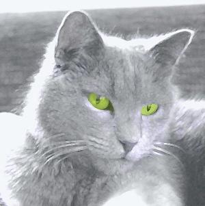 charteux-cat